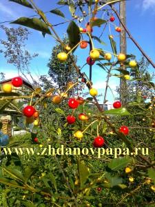 Биологическая защита для получения гарантированных урожаев