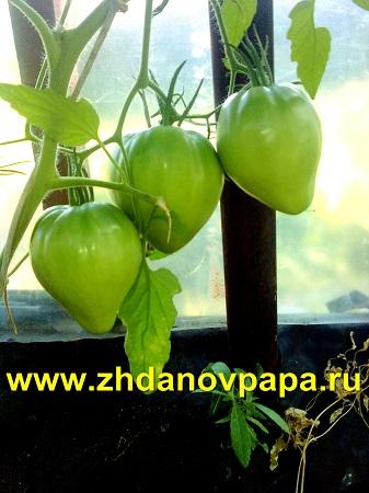 Выращивать помидоры - wikiHow