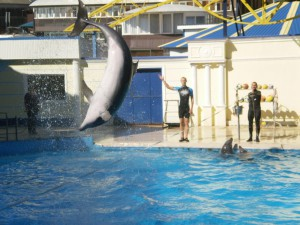 Дельфинарий в Небуге. Черное море