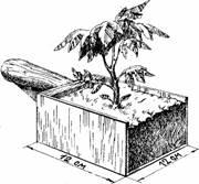 Рассада, как основа гарантированного урожая