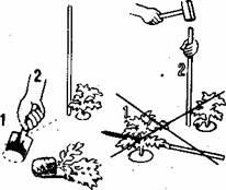 Помидоры, выращивание