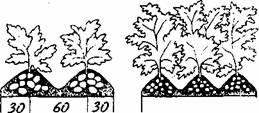 выращивание картофеля в вопросах и ответах