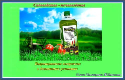 Выращивание хлореллы в домашних условиях